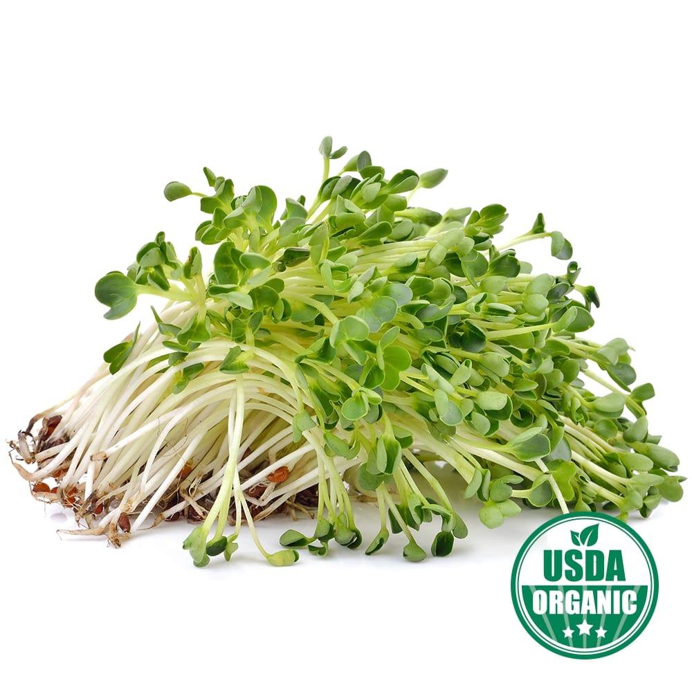 Organic Alfalfa