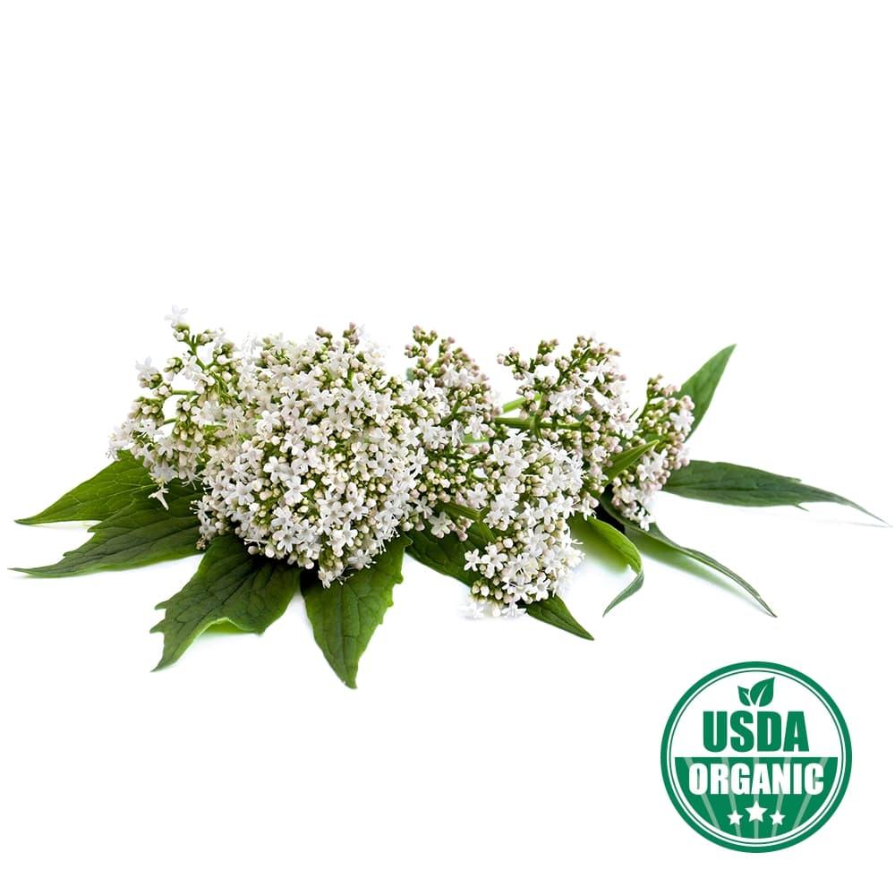 Organic Valerian